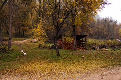 Autumn landscape of wood countryside life Stock Image
