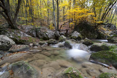 Autumn landscape in the wood with  small river Stock Photo