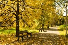 Autumn Landscape With Wooden Benches debajo de árboles con el pasto amarillo fotografía de archivo libre de regalías