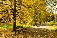 Autumn Landscape With Wooden Benches under träd med den gula betesmarken royaltyfri fotografi