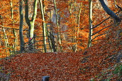 Autumn landscape with wooden fence and fallen leaves in the forest Royalty Free Stock Photos
