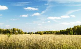 Autumn landscape in woodland Stock Photography