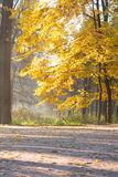 Autumn landscape in yellow colors Stock Photo