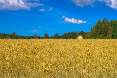 Autumn landscape. Yellow field and blue sky Stock Image