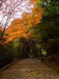 Autumn landscape, yellow, orange and red Autumn trees and leaves ,Colorful foliage in the Autumn park at Kyoto. Japan Stock Image