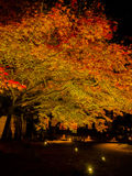 Autumn landscape, yellow, orange and red autumn trees and leaves, colorful foliage during night with some lights. Reflecting the foliage at Kyoto, Japan Royalty Free Stock Photo
