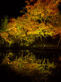 Autumn landscape, yellow, orange and red autumn trees and leaves, colorful foliage during night with some lights. Reflecting the foliage at Kyoto, Japan Royalty Free Stock Photos