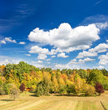Autumn landscape with yellow red trees and blue sky Stock Photo