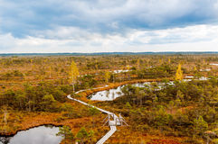 Autumn landscape of yellow swamp. With path Stock Photo
