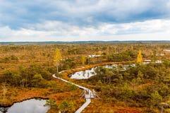 Autumn landscape of yellow swamp Stock Photo
