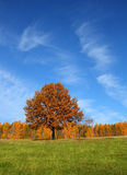 Autumn landscape with yellow tree royalty free stock photos