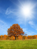Autumn landscape with yellow tree Royalty Free Stock Photo
