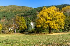 Autumn Landscape with yellow tree near Pancharevo lake, Sofia city Region, Bulgaria. Amazing Autumn Landscape with yellow tree near Pancharevo lake, Sofia city royalty free stock images