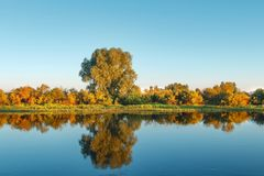 Autumn landscape of yellow trees and grass on river shore in clear morning. stock image