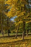 Autumn landscape with Yellow trees in South Park, Sofia, Bulgaria. Autumn landscape with Yellow trees in South Park in city of Sofia, Bulgaria royalty free stock photos