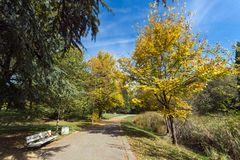 Autumn landscape with Yellow trees in South Park in city of Sofia, Bulgaria Stock Photography