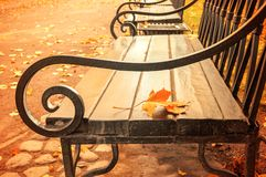 Autumn landscape - yellowed autumn leaf on the wooden lonely bench in the autumn park Royalty Free Stock Images