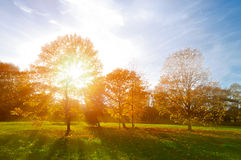 Autumn landscape -yellowed autumn park in autumn sunny evening. Colorful autumn view of sunset park with sunbeams. Royalty Free Stock Photos