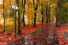 Autumn landscape. Red autumn trees and fallen autumn leaves on the wet footpath in park alley after rain Stock Photo