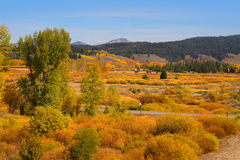 Autumn landscape in Yellowstone Royalty Free Stock Photos