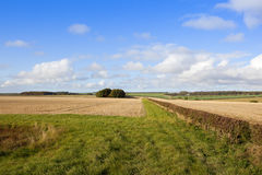 Autumn landscape on the Yorkshire wolds. Patterns and textures of an autumn landscape with hedgerows and fields under a blue sky Royalty Free Stock Photos