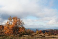 Autumn landscapes. In Crimean mountain Stock Images