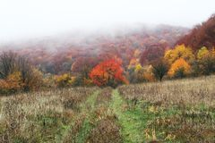 Autumn landscapes. In misty mountains Royalty Free Stock Image