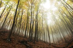 Autumn landscapes. Fog in the autumn forest Royalty Free Stock Image