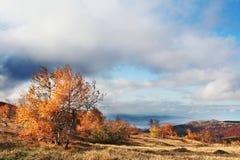 Autumn landscapes Royalty Free Stock Photo