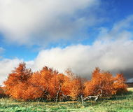 Autumn landscapes. In the village Stock Image