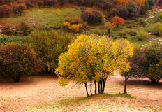 Autumn landscapes Royalty Free Stock Photos