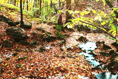 Autumn landscapes. In the forest Royalty Free Stock Photography