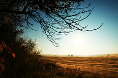 Autumn landscapes. In the morning Stock Images
