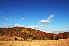 Autumn landscapes. In sunny day Stock Photography