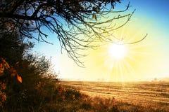 Autumn landscapes. Autumn plant on sunny background Royalty Free Stock Photo