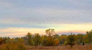 Autumn landscapes against the background of flying birds. In autumn the nature changes from green to different colors. Prepare for winter, and birds fly to Stock Photo