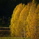 Autumn in landscapes. Autumn in karula natural reserve Royalty Free Stock Photo