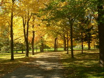 Autumn landscaspe in the park I. Autumn landscaspe in the park stock photography