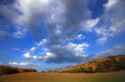 Autumn landscrape trees under sky. Beautiful senic in autumn, yellow forest, beautiful blue skys and clouds, located in Neimeng, China Royalty Free Stock Photography