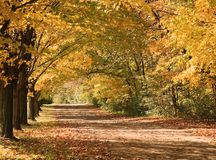 Autumn Lane Royalty Free Stock Image
