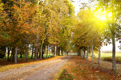 Autumn lane Stock Image