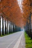 Autumn lane. Dutch polder road in fall color stock photos