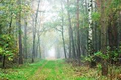 Autumn lane Royalty Free Stock Image