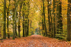 Autumn lane. Colourful forest lane in autumn setting Royalty Free Stock Images