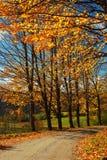 Autumn Lane en un día soleado Imagen de archivo