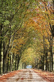 Autumn lane in the forest Stock Photography