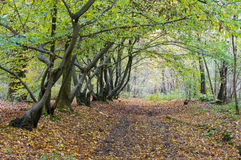 Autumn Lane In A Forest Stock Photos