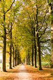 Autumn lane with people and tree trunks, Netherlands Stock Photography