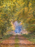 Autumn lane with towering Beech Royalty Free Stock Images