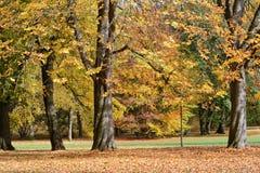 Autumn Lanscape Imagen de archivo libre de regalías